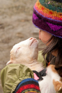New Moon Farm Goat Rescue and Sanctuary