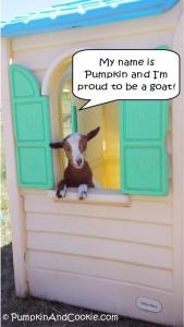 Pumpkin Proud to Be a Goat PumpkinAndCookie.com